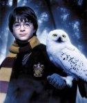 HP-owl